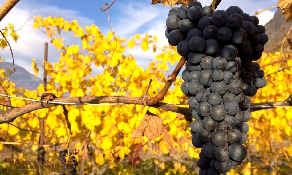 Dégustation à Bordeaux pour la «Renaissance des appellations»